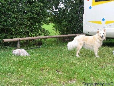 Hund Im Womo Ja Haare Und Schmutz Nein Wohnmobil Forum Seite 2